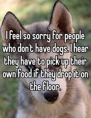 Click image for larger version  Name:Dogs 1.jpg Views:588 Size:30.6 KB ID:100312