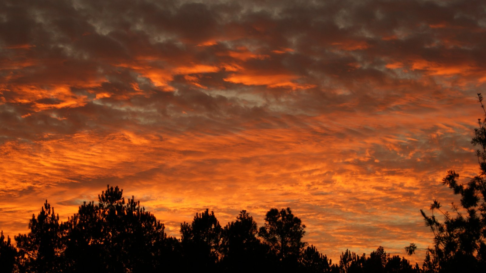 Click image for larger version  Name:Christmas Sky1 12-25-10.jpg Views:92 Size:183.0 KB ID:10279