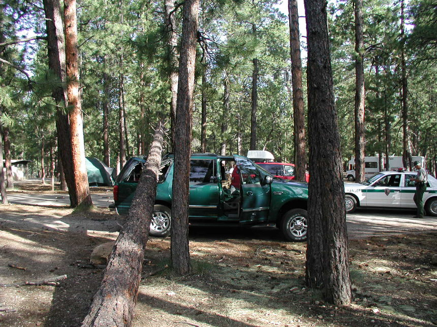 Click image for larger version  Name:tree on car.jpg Views:56 Size:674.4 KB ID:103339