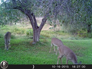 Click image for larger version  Name:TRAIL CAM 10-18-15 012.jpg Views:41 Size:557.1 KB ID:109839