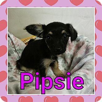Name:  Pipsie.jpg Views: 83 Size:  24.6 KB