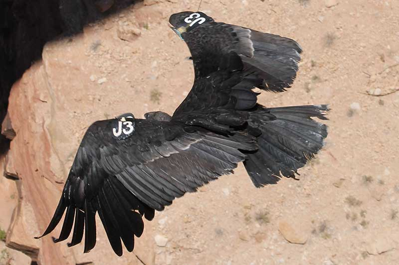 Click image for larger version  Name:Condor1.jpg Views:32 Size:46.2 KB ID:126976