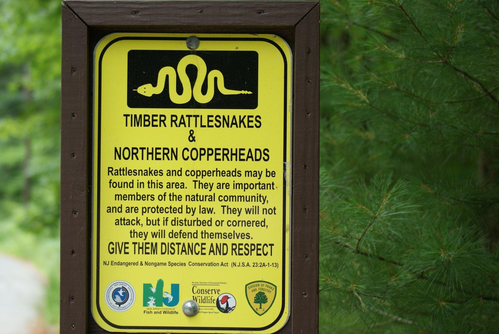 Click image for larger version  Name:Snake,NJ 06-11-10.jpg Views:106 Size:261.4 KB ID:13251