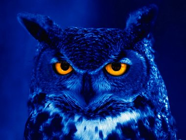 Click image for larger version  Name:Night owl.jpg Views:80 Size:167.7 KB ID:14707