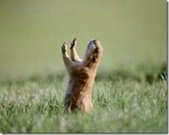 Name:  Prarie dog prayer.jpg Views: 58 Size:  9.5 KB