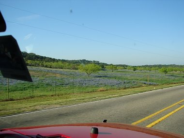 Click image for larger version  Name:Wildflowers 001.JPG Views:89 Size:140.7 KB ID:19317