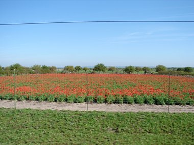 Click image for larger version  Name:Wildflowers 008.JPG Views:87 Size:152.5 KB ID:19319