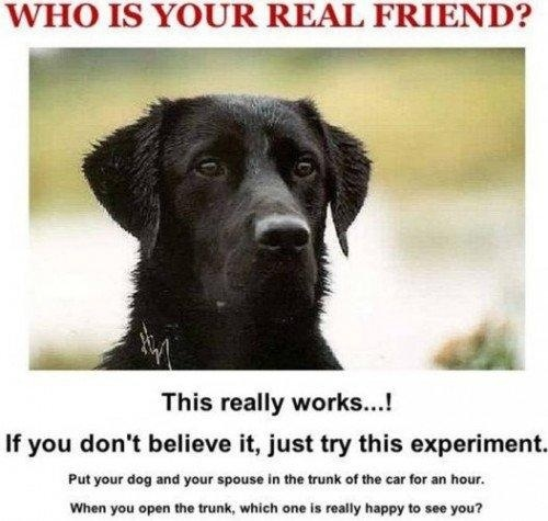 Click image for larger version  Name:best friend.jpg Views:215 Size:63.4 KB ID:19426