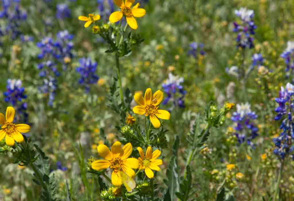 Click image for larger version  Name:more-wildflowers.jpg Views:30 Size:38.4 KB ID:19670