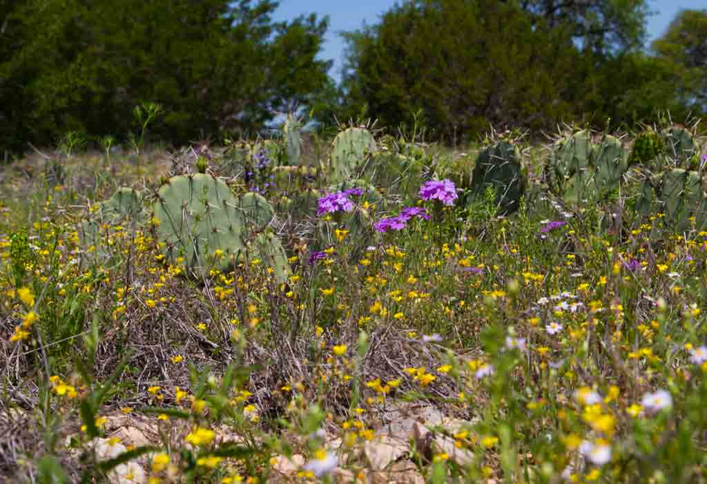 Click image for larger version  Name:wild-n-cactus.jpg Views:29 Size:61.0 KB ID:19671