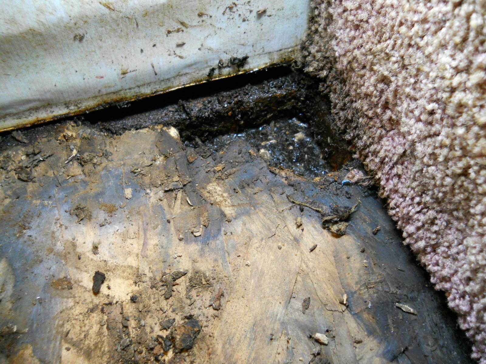 Click image for larger version  Name:Rotted floor left side 002.jpg Views:36 Size:435.1 KB ID:21757