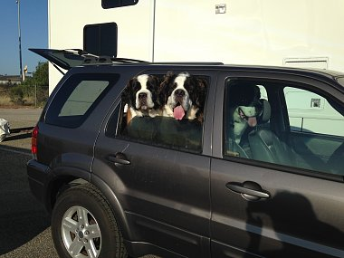 Click image for larger version  Name:Dogs IMG_8726.jpg Views:5 Size:227.2 KB ID:249505