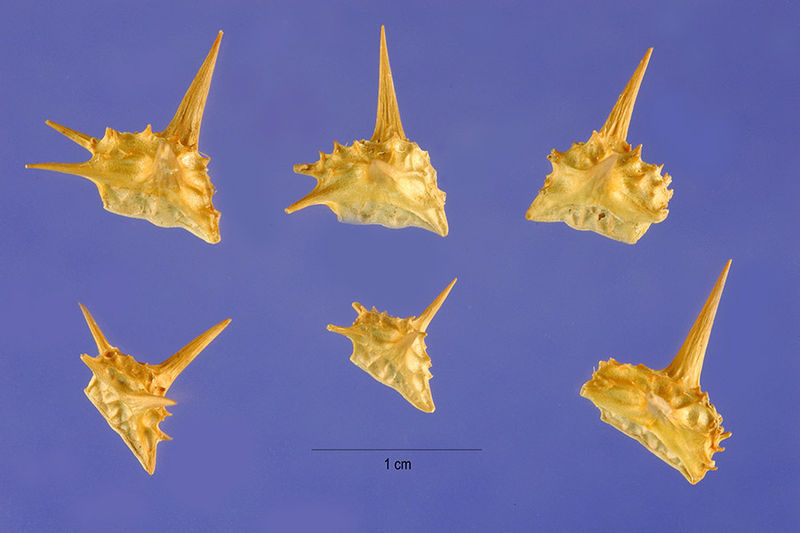 Click image for larger version  Name:goats heads.jpg Views:33 Size:50.5 KB ID:28088
