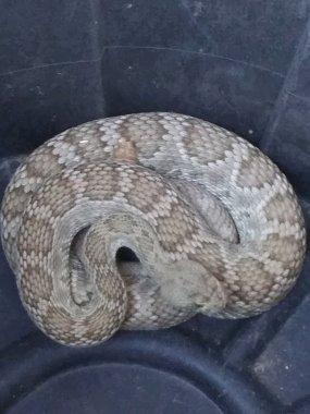 Click image for larger version  Name:snake 2.jpg Views:9 Size:201.1 KB ID:281223