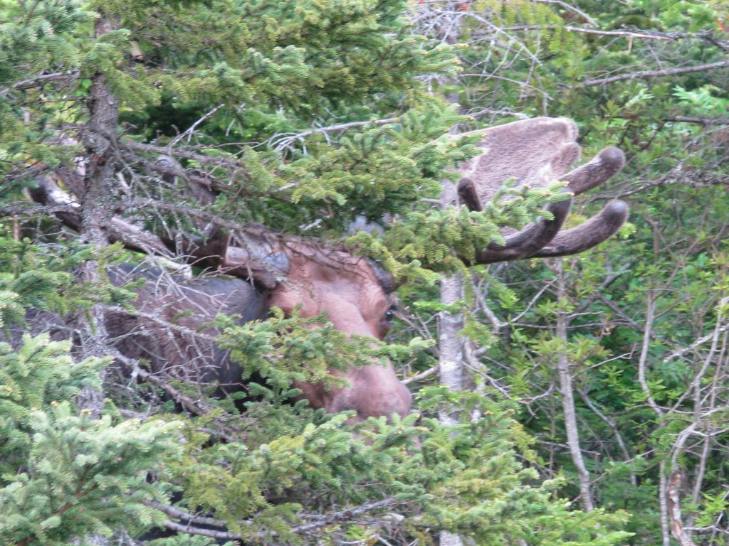 Click image for larger version  Name:moose.jpg Views:35 Size:206.9 KB ID:32735