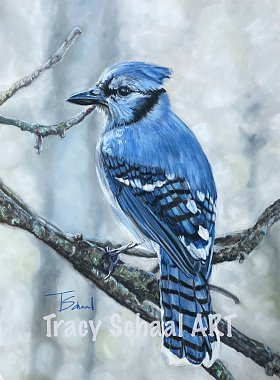 Click image for larger version  Name:Blue Jay watermark.jpg Views:16 Size:302.7 KB ID:336078