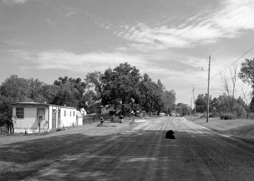 Click image for larger version  Name:112710-dog-rural-road-princeton-mo-dsc06393-useme.jpg Views:31 Size:46.4 KB ID:35653