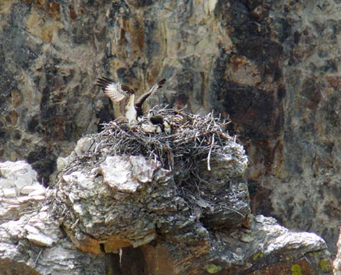 Click image for larger version  Name:On the nest.jpg Views:51 Size:95.4 KB ID:42292