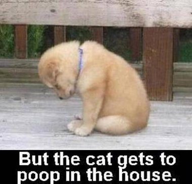Click image for larger version  Name:poor puppy.jpg Views:64 Size:22.2 KB ID:47099