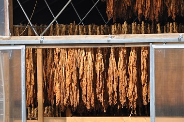 Click image for larger version  Name:Amish Burley Tobacco.jpg Views:69 Size:362.0 KB ID:48867