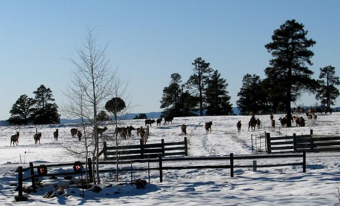 Click image for larger version  Name:elk.jpg Views:38 Size:102.4 KB ID:49792