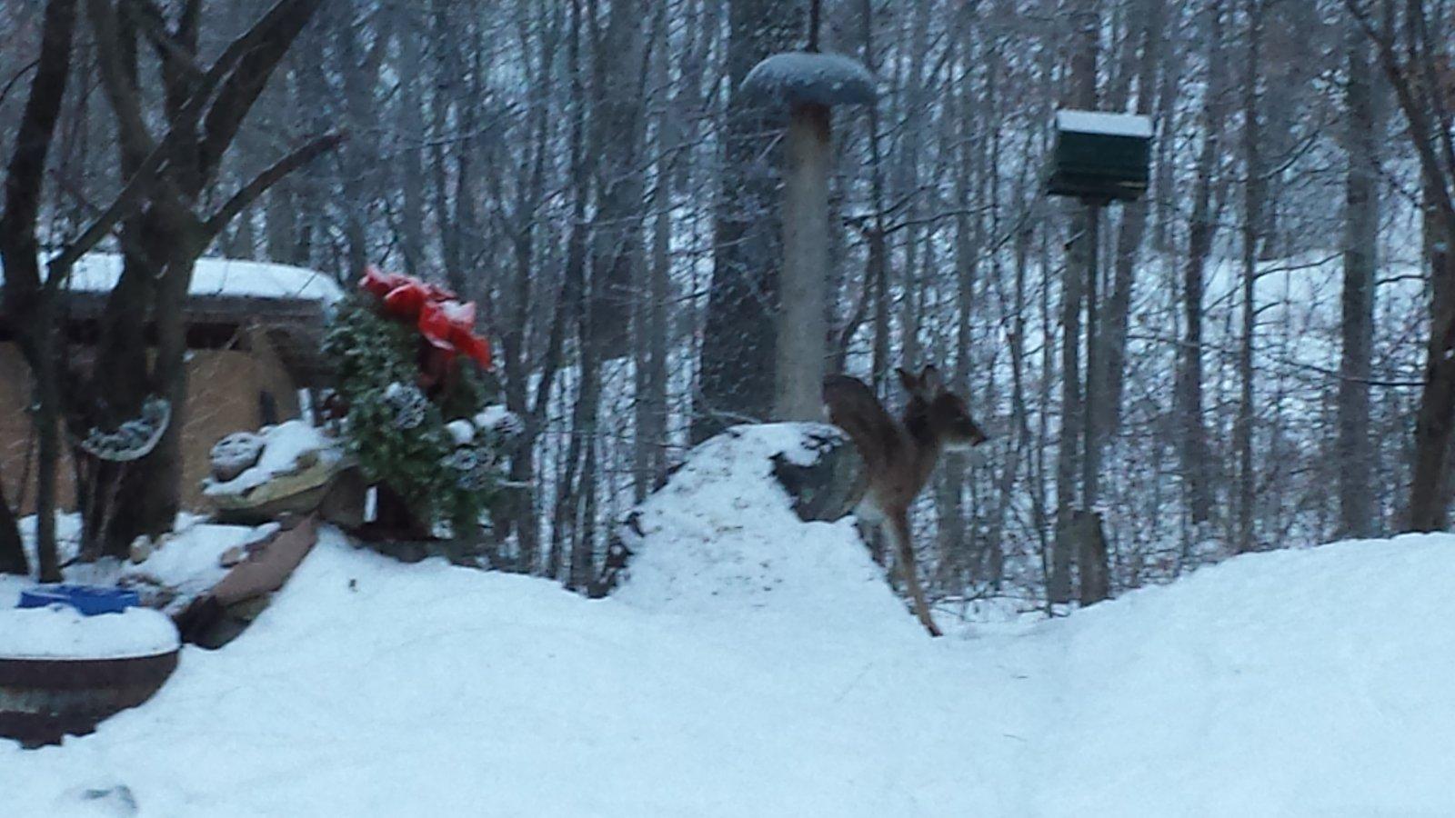 Click image for larger version  Name:Deer at feeder.jpg Views:63 Size:209.9 KB ID:55738