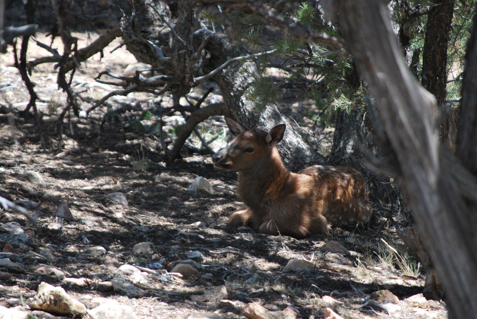 Click image for larger version  Name:Elk 2.jpg Views:27 Size:380.1 KB ID:56333