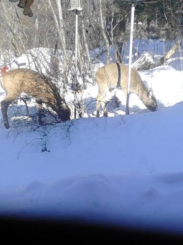 Click image for larger version  Name:Deer.jpg Views:51 Size:24.4 KB ID:57362