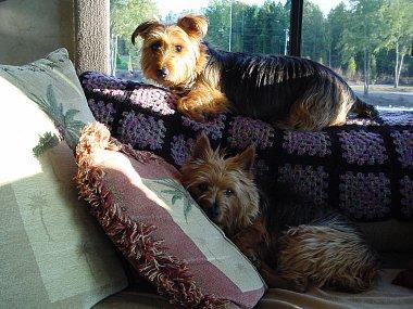 Click image for larger version  Name:Abby and Koda awake.jpg Views:50 Size:252.6 KB ID:6129