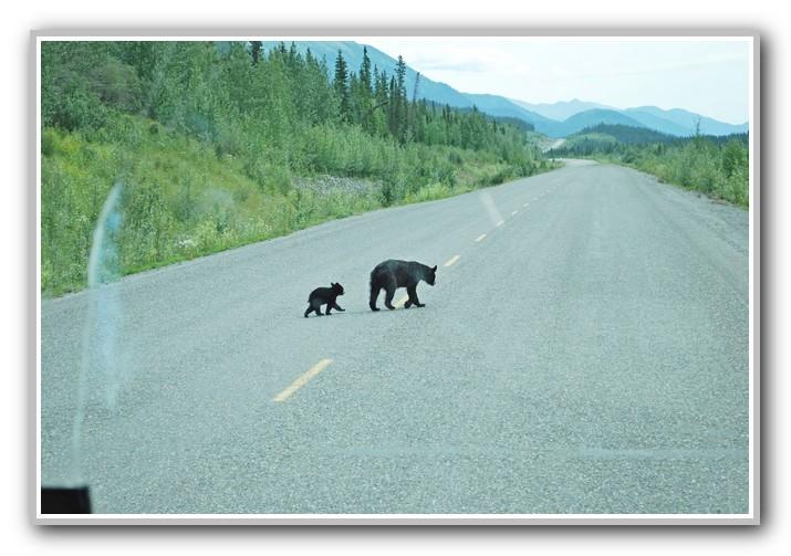 Click image for larger version  Name:Alaska 2010 07803.jpg Views:271 Size:135.3 KB ID:67688