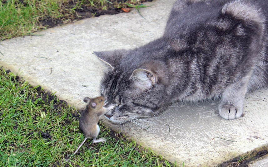 Click image for larger version  Name:cat-and-mouse 1.jpg Views:276 Size:180.5 KB ID:69005