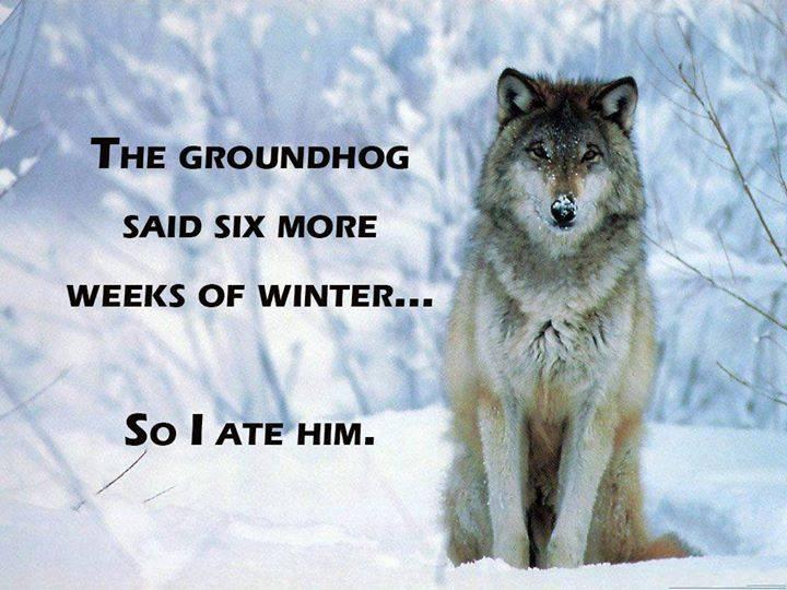 Click image for larger version  Name:groundhog.jpg Views:96 Size:144.5 KB ID:85004