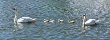 Quack-Quack.png