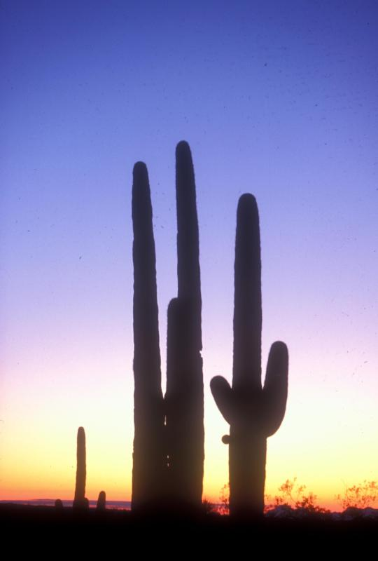 Southern Arizona snowbird attractions